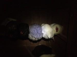 Nos petite poulettes, qui chill avec Ueli